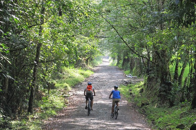 3-Day Biking and Hiking; Nature, Coffee, Culture and Cocora Valley from Pereira