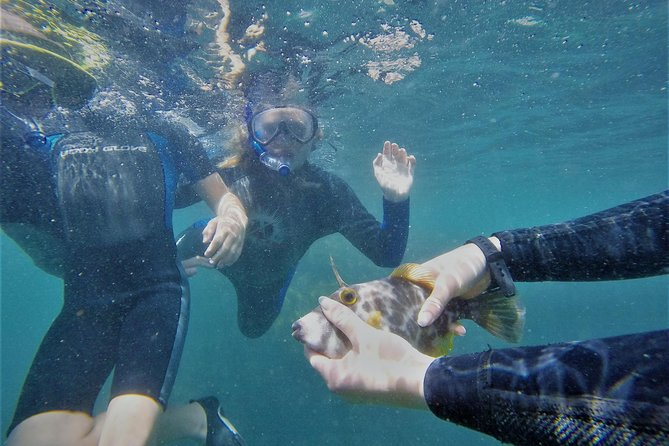 Island Snorkeling and Wildlife Boat Cruise photo 4