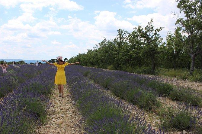 Lavender fields wine tasting at Chateau de Berne Moustiers Grand Canyon Verdon