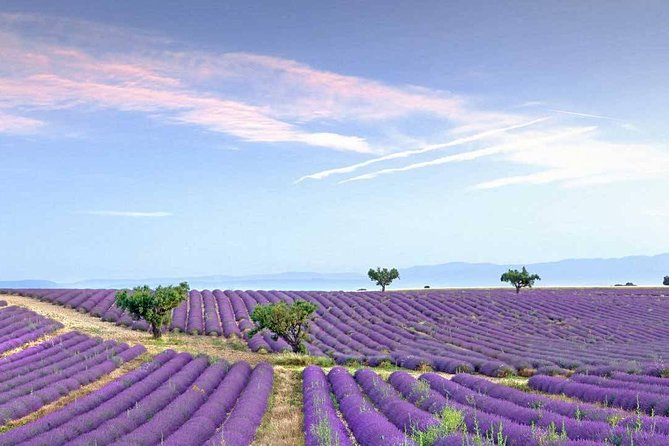 Dream of women Lavender fields and lunch in Provence
