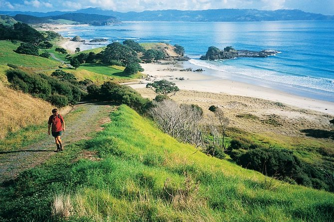 Private Day Tour to Tawharanui Regional Park from Auckland
