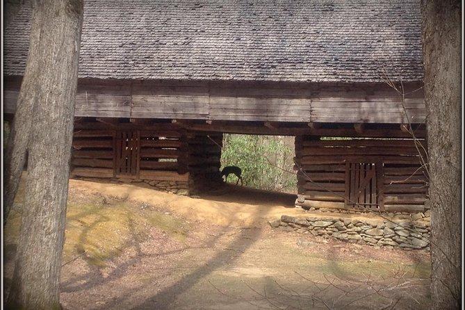 Deer at barn