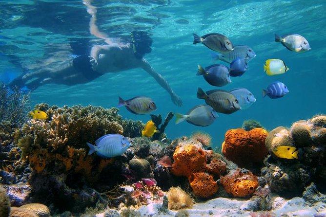 Snorkeltur til Puerto Morelos fra Cancun