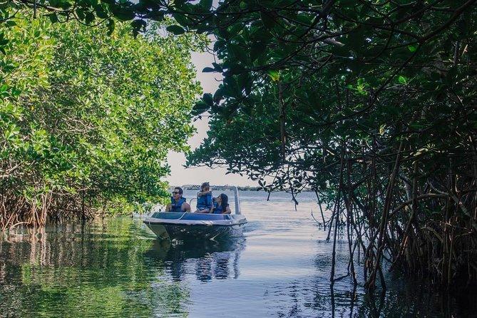 Eventyr Mangrovekanaler: Kjør din egen fartbåt