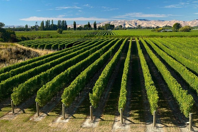 Cruise Ship Excursion Full Day Marlborough Wine Region Tour from Picton