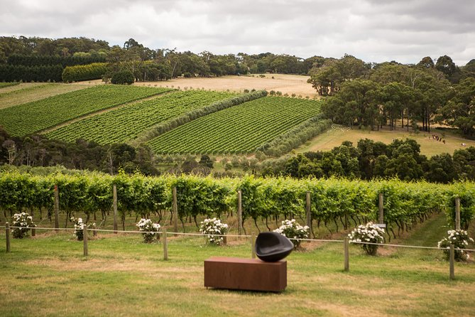 Montalto Vineyard: Mornington Peninsula Discovery Wine Tasting and Lunch