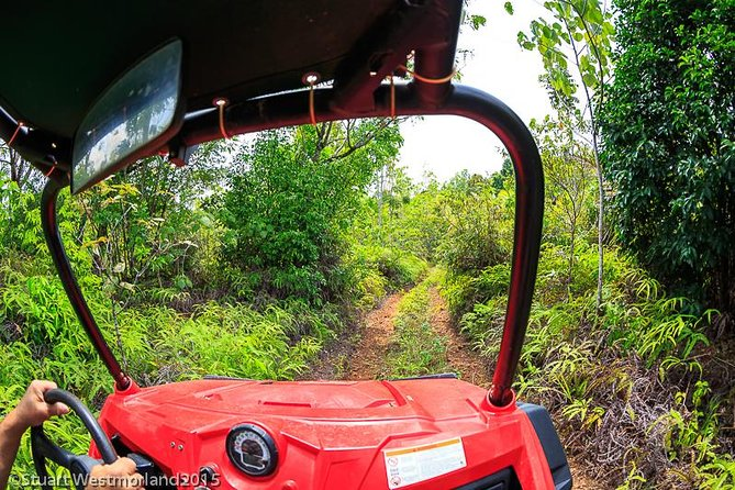 Off-Road Small-Group Jungle Driving Adventure with Lunch