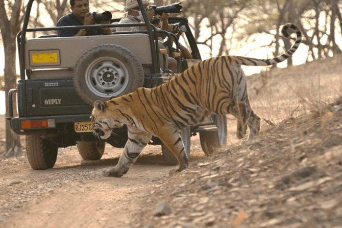 Private Day Trip to Ranthambore National Park with Shared Safari From Jaipur
