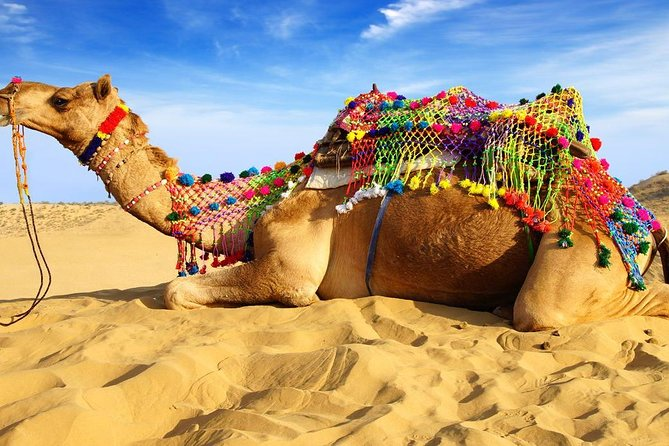 Experience Pushkar Camel Fair Festival with Transportation & Guide only