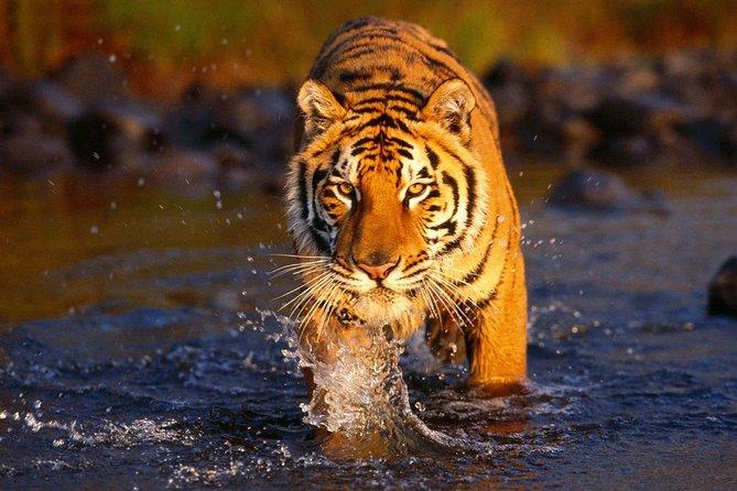 Private Transfers Agra To Sawai Madhopur Drop
