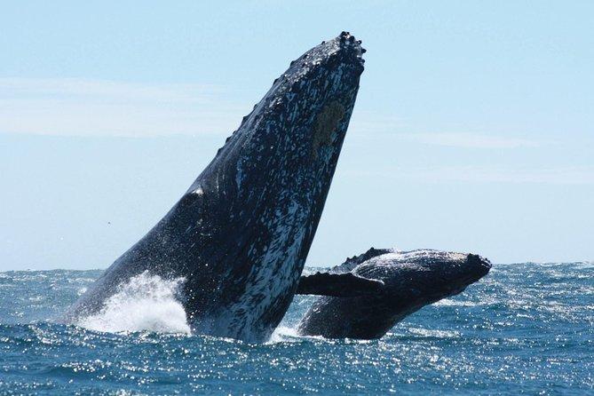 Private hvalsafari i Los Cabos