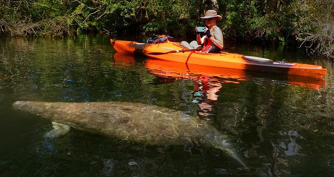 Self-Guided Kayaking Manatee and Dolphin Tour photo 1