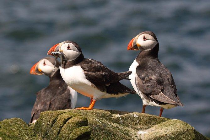 Wildlife Cruise from John O'Groats