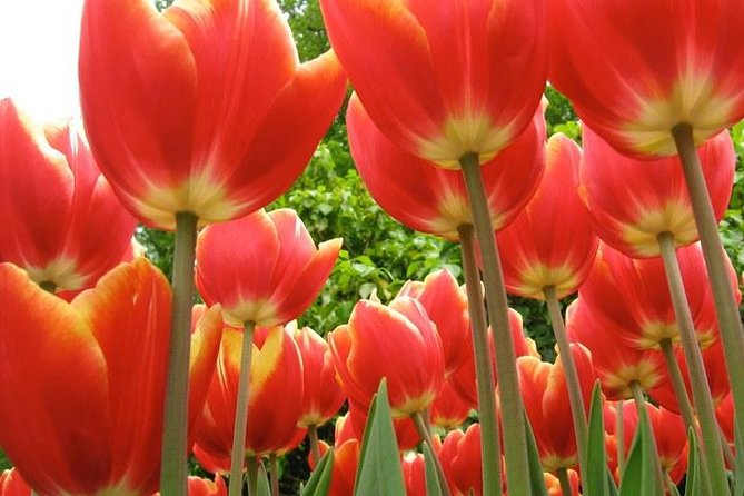 Private Tour to Keukenhof Gardens - Full Day Tour from Amsterdam