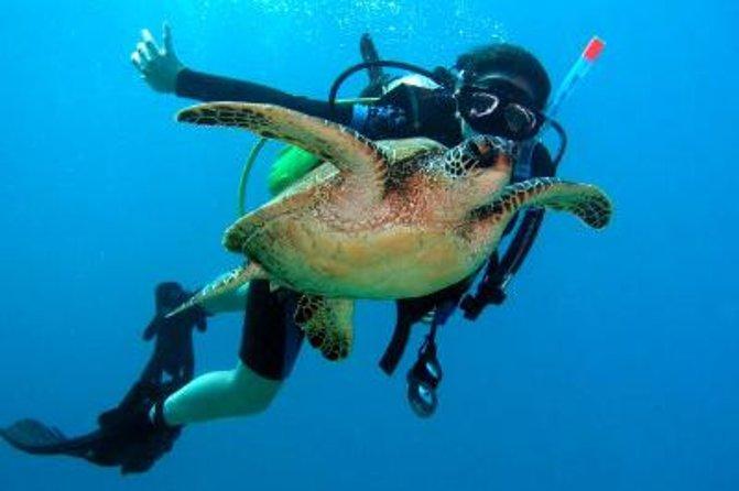 Scuba Diving for Beginners on the Leeward Coast