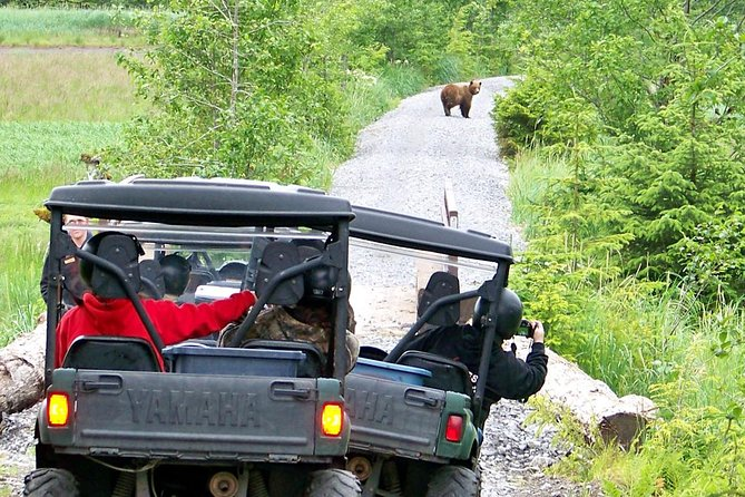 Sightings of Alaska Coastal Brown Bears are common
