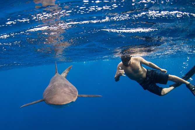 Half-Day Snorkeling or Swimming with Sharks in Cabo San Lucas