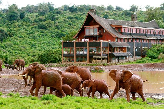 6-Day Aberdare, Lake Nakuru and Masai Mara Safari from Nairobi