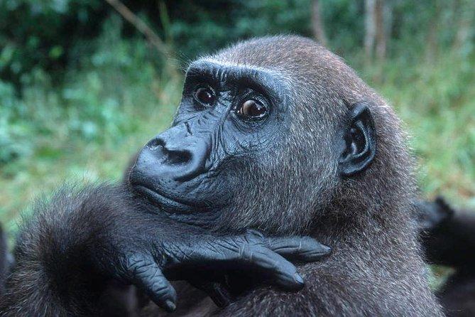 8 Days 7 Nights Uganda Gorrilla Trekking