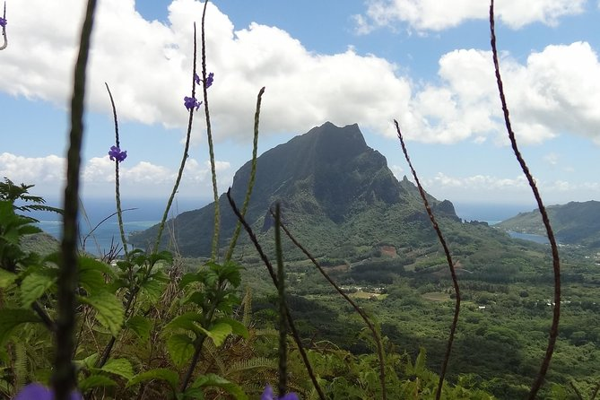 Moorea Three Coconuts Trail Guided Hike photo 1