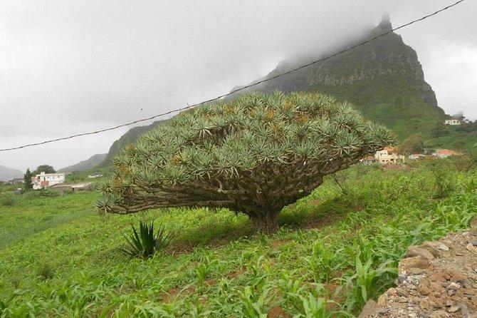 Monte Gordo Guided Hiking Tour from Tarrafal