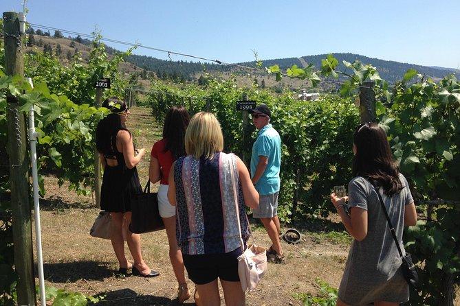 Walk amongst the vines