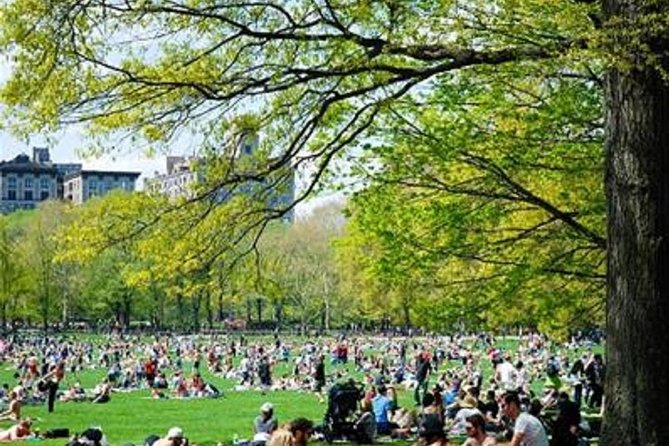 Ultimate New Yorker Picnic Experience