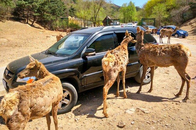 Beijing Badaling Wildlife Park & Juyongguan Great Wall Private Tour