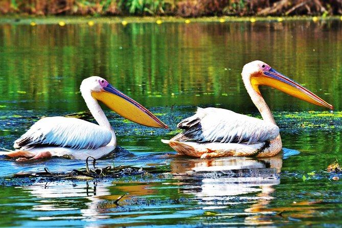 Wildlife Adventure in Danube Delta - 9 Days Private Tour