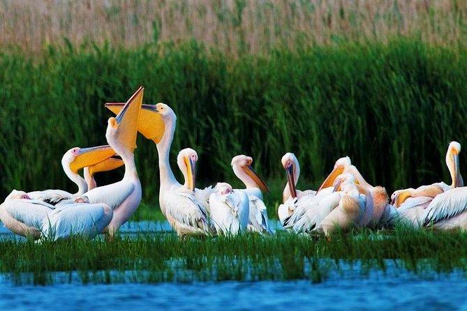 Explore Wild Danube Delta from Romania - Private Guided Tour in 2 Days