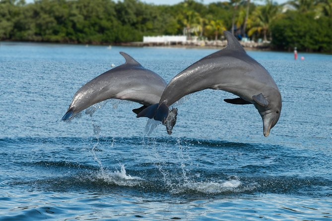 Clearwater Beach Day Trip from Orlando with Dolphin Encounter Cruise photo 1