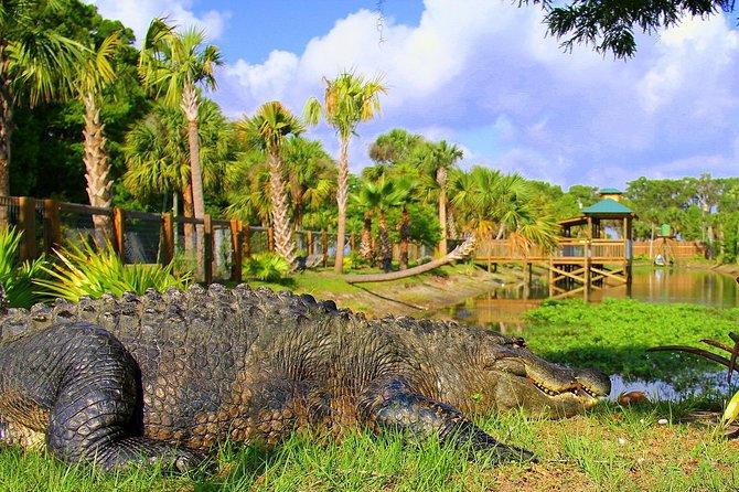 Explore Wild Florida from Orlando