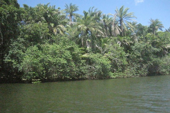 Private Jungle River Boat Tour from Salvador Airport or Abrantes