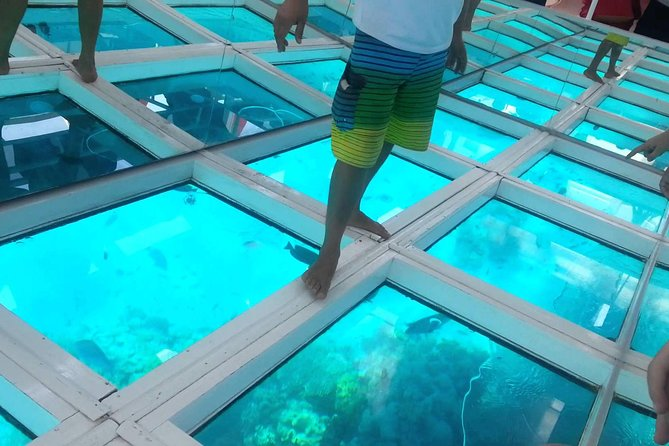 Glass Bottom Boat Trip in Sharm el Sheikh photo 1