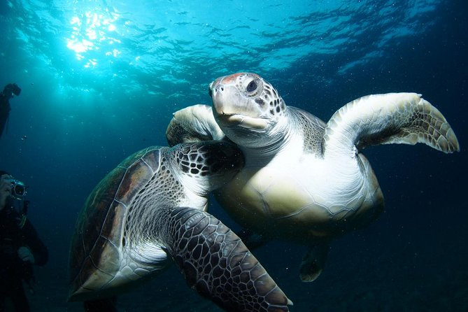 Tenerife Turtle and Snorkel Tour from Costa Adeje