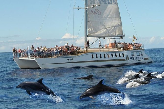 Dolphin Watching Cruise and Visit to Mogan Street Market