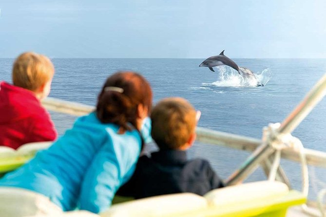 Experience a Sunrise with Dolphins
