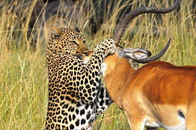 3-Day Budget Maasai Mara Safari from Nairobi