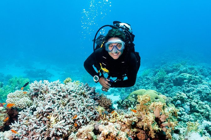 Dive Our Barrier Reef