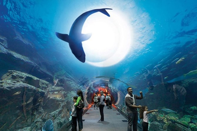 City tour & Dubai Mall Activities + Burj Khalifa PRIVATE tour