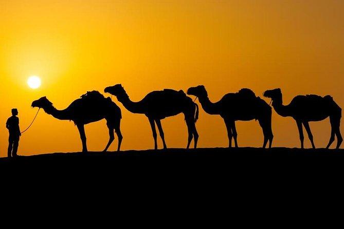 Khaki Desert Trek