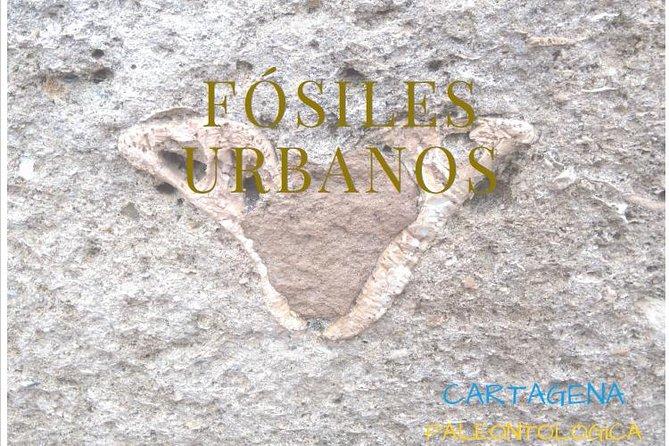 Paleontological tour in Cartagena (Spain)