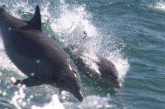 Excursion au dauphin de Waverunner
