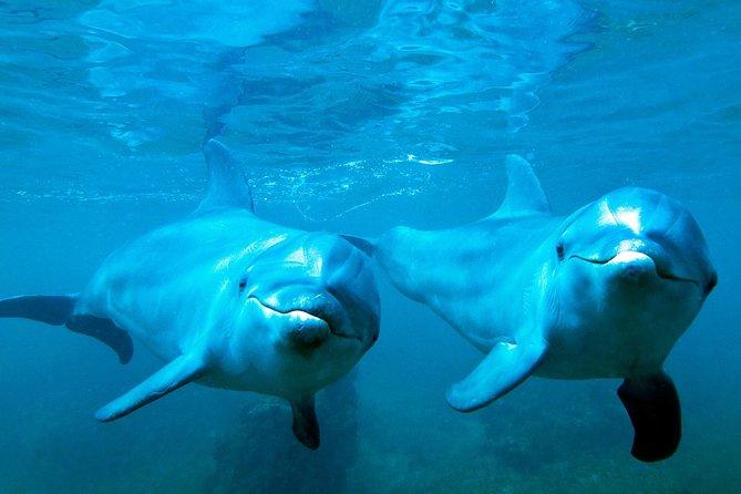 Excursion avec observation des dauphins et plongée libre à Shell Island