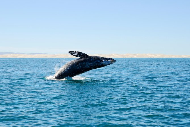 Deep-Sea Fishing or Whale-Watching Full-Day Excursion from Bilbao photo 1