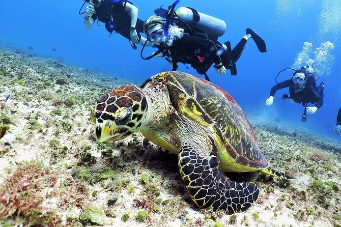 Discover Scuba Diving Course in Playa del Carmen with Two Coral Reef Dives photo 7