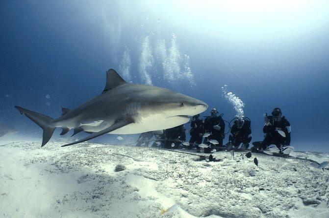 Bull Shark Dive in Playa del Carmen - 2-tanks - Seasonal (Nov-March)