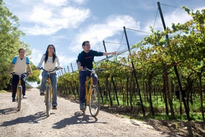 Bike & Wine Tasting with regional food in Zuccardi Winery (from Mendoza)