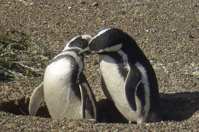 Excursion to Punta Tombo Penguin Reserve from Puerto Madryn