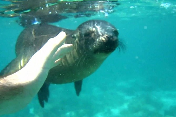 Snorkeling with Sea Lions in Punta Loma (from Puerto Madryn) photo 1